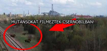 MUTÁNSOKAT FILMEZTEK CSERNOBILBAN!