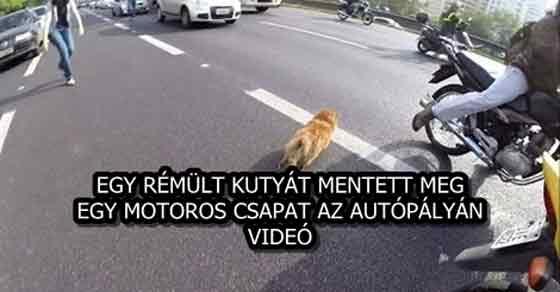 EGY RÉMÜLT KUTYÁT MENTETT MEG EGY MOTOROS CSAPAT AZ AUTÓPÁLYÁN - VIDEÓ