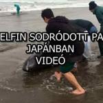150 DELFIN SODRÓDOTT PARTRA JAPÁNBAN - VIDEÓ