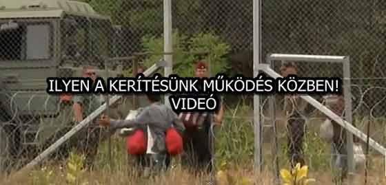 ILYEN A KERÍTÉSÜNK MŰKÖDÉS KÖZBEN! - VIDEÓ