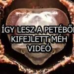 ÍGY LESZ A PETÉBŐL, KIFEJLETT MÉH - VIDEÓ