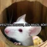 ÍGY CSEMPÉSZTEK DROGOT, EGY BRAZIL BÖRTÖNBEN