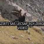 A SZIRTI SAS LECSAP EGY ZERGÉRE - VIDEÓ