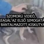 SZOMORÚ VIDEÓ, ÍGY REAGÁL AZ ELSŐ SIMOGATÁSRA A BÁNTALMAZOTT KISKUTYA