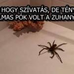 AZT HITTE HOGY SZÍVATÁS, DE TÉNYLEG EGY HATALMAS PÓK VOLT A ZUHANYBAN