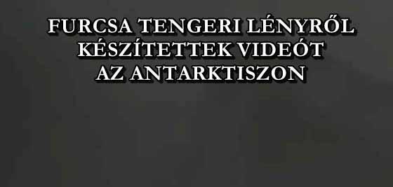 FURCSA TENGERI LÉNYRŐL KÉSZÍTETTEK VIDEÓT AZ ANTARKTISZON