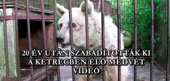 20 ÉV UTÁN SZABADÍTOTTÁK KI A KETRECBEN ÉLŐ MEDVÉT - VIDEÓ