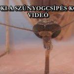 ÍGY NÉZ KI A SZÚNYOGCSÍPÉS KÖZELRŐL - VIDEÓ
