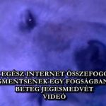 AZ EGÉSZ INTERNET ÖSSZEFOGOTT, HOGY MEGMENTSENEK EGY FOGSÁGBAN TARTOTT, BETEG JEGESMEDVÉT – VIDEÓ