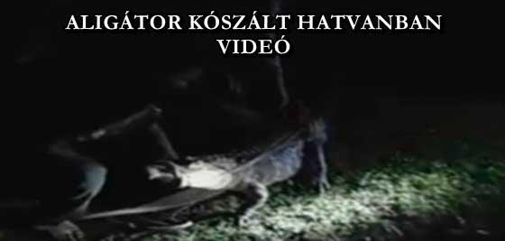 ALIGÁTOR KÓSZÁLT HATVANBAN - VIDEÓ