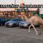 TEVE ROHANGÁLT A SOPRONI TESCÓNÁL – VIDEÓ