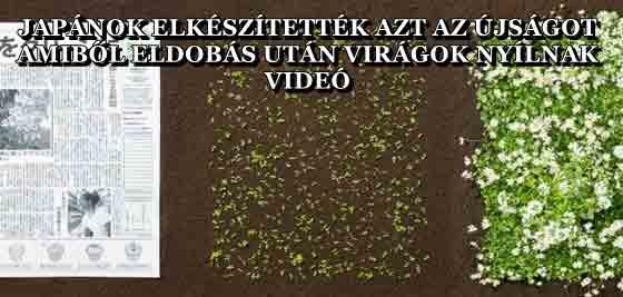 JAPÁNOK ELKÉSZÍTETTÉK AZT AZ ÚJSÁGOT, AMIBŐL ELDOBÁS UTÁN VIRÁGOK NYÍLNAK - VIDEÓ