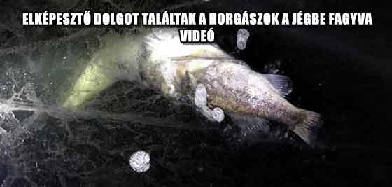 ELKÉPESZTŐ DOLGOT TALÁLTAK A HORGÁSZOK A JÉGBE FAGYVA - VIDEÓ