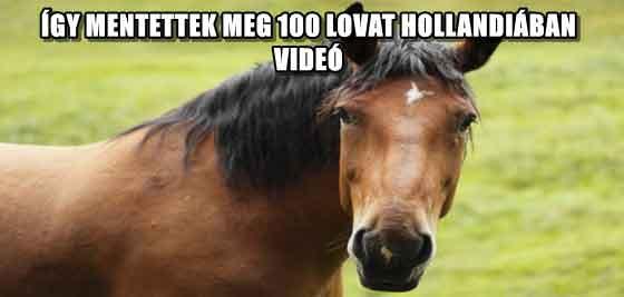ÍGY MENTETTEK MEG 100 LOVAT HOLLANDIÁBAN - VIDEÓ