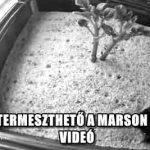 VALÓBAN TERMESZTHETŐ A MARSON BURGONYA - VIDEÓ