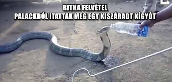 RITKA FELVÉTEL - PALACKBÓL ITATTAK MEG EGY KISZÁRADT KÍGYÓT