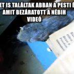 DÖGLÖTT EGERET IS TALÁLTAK ABBAN A PESTI ÉTTEREMBEN, AMIT BEZÁRATOTT A NÉBIH - VIDEÓ