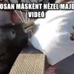 EZUTÁN BIZTOSAN MÁSKÉNT NÉZEL MAJD A FÓKÁKRA - VIDEÓ
