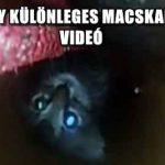ILYEN EGY KÜLÖNLEGES MACSKAMENTÉS – VIDEÓ