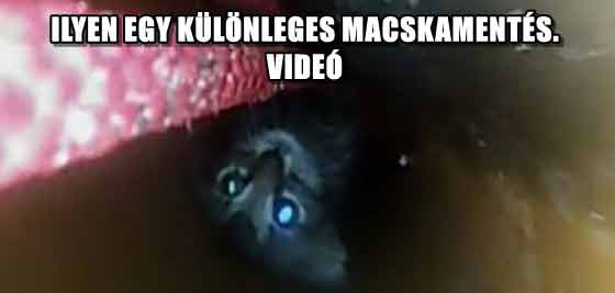 ILYEN EGY KÜLÖNLEGES MACSKAMENTÉS - VIDEÓ